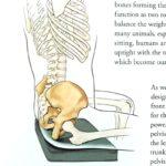 宗像整体−腰痛−姿勢